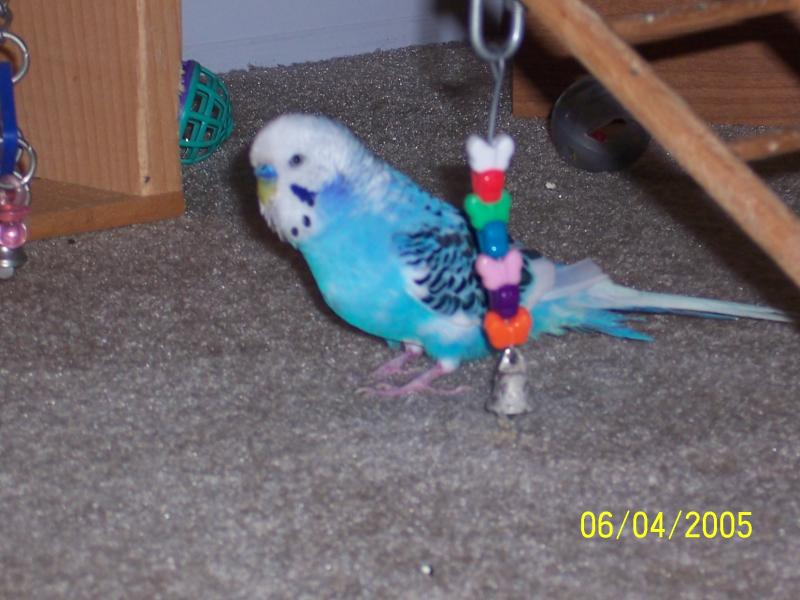 "parakeet named ""Petey"" he talks"